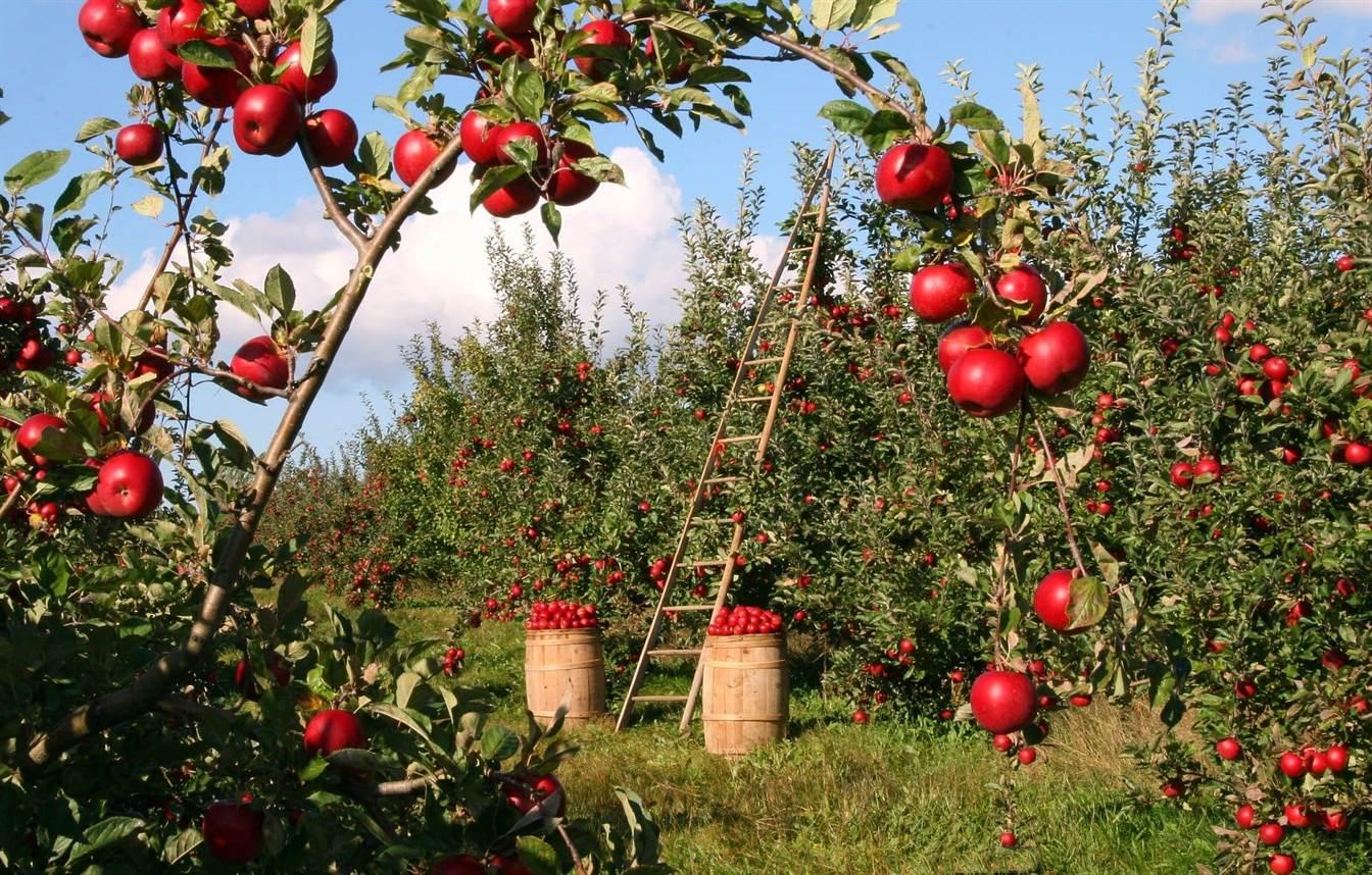 Stropirea pomilor fructiferi – Calendar 2020