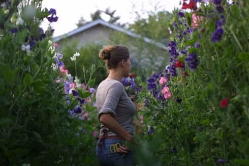 Cum sa alegi plantele potrivite pentru gradina ta?