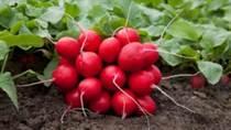 5 legume de cultivat in gradina recomandate de Societatea Horticola Regala
