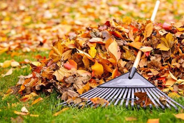 Îndepartarea frunzelor de pe gazon
