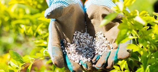 Ghid de fertilizare