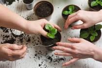 12 Greșeli de grădinărit comise de orice grădinar