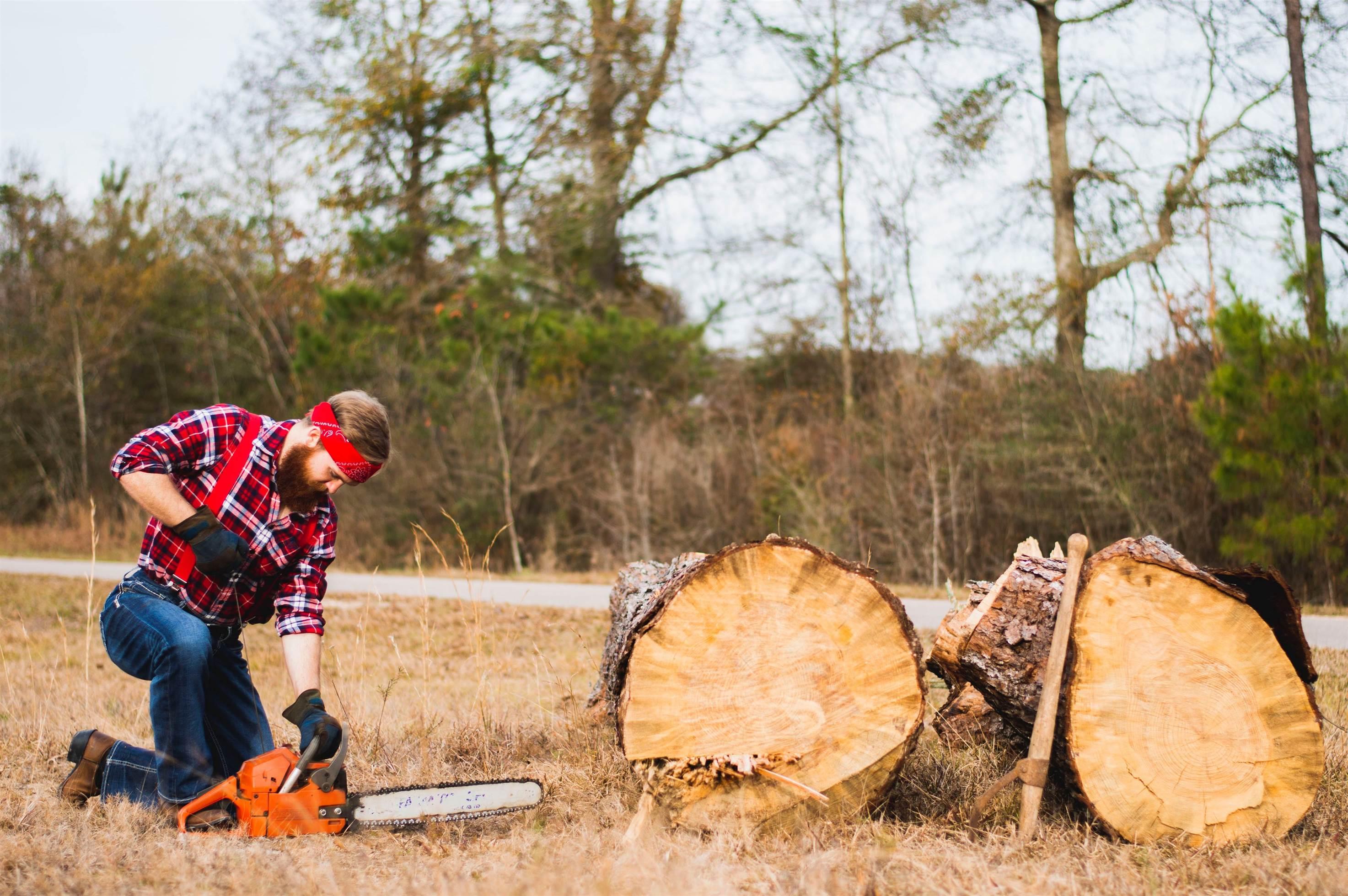 Taierea lemnelor