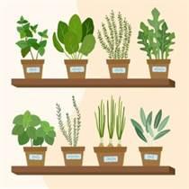 Grădinărit urban, sau cum să recoltăm distracția într-un spațiu mic!