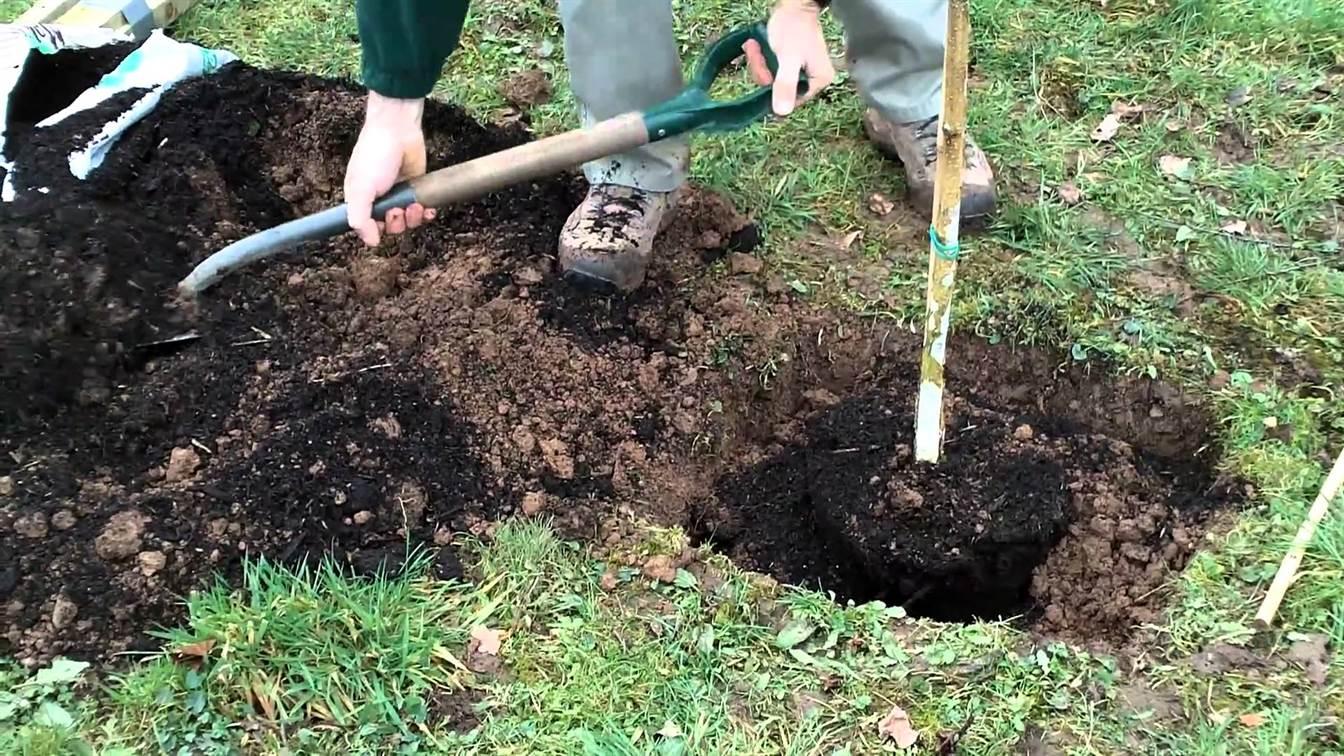 Plantarea unui pom – un ghid pas cu pas
