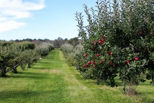 Taierea pomilor fructiferi – Ghid Complet